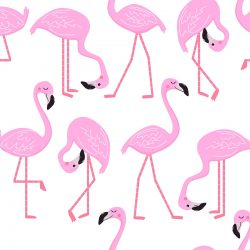 Flamingos on white